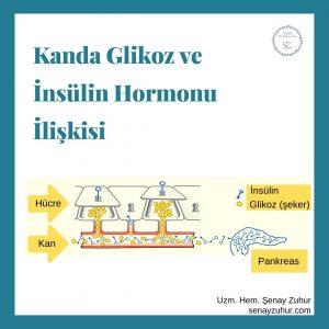 Kanda Glikoz ve İnsülin Hormonu İlişkisi